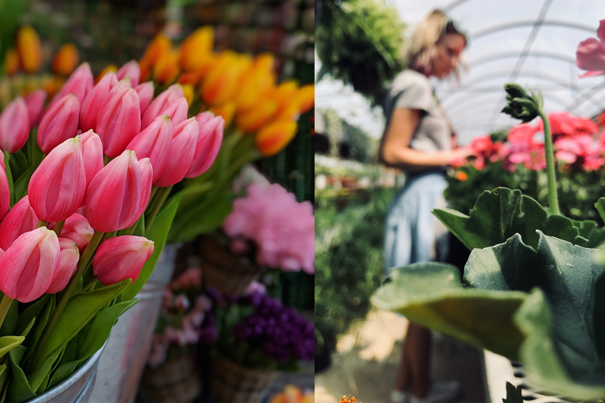 Collage of nursery and flowers
